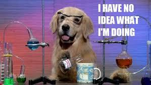 I have no idea what I am doing dog.jpg